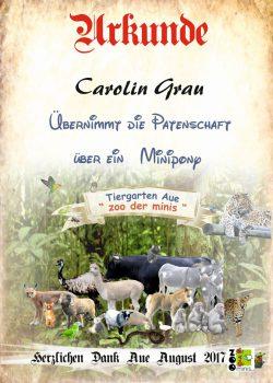 17 08 11 Carolin Grau Minipony