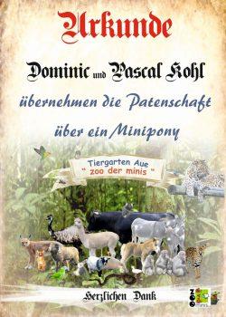 17 10 06 Pate Dominic und Pascal Kohl Minipony
