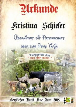 18-06-05-Kristina-Schiefer-Pony-Tarjakl