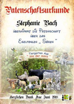 18-06-12-Stephanie-Bach-über-Jens-Köhler-Eselhengstkl