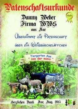 Gold 12 Danny Weber-Weissbueschelaeffchen