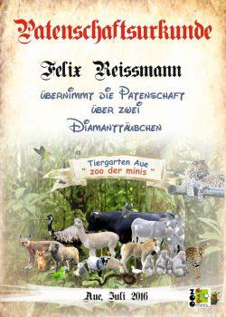 Pate 16 Felix Reissmann 2 Diamanttäubchen