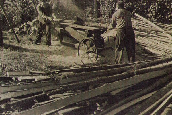 Aufbauarbeiten Tierpark Aue 1960