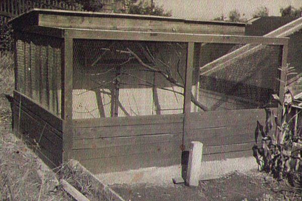 Die ersten Bewohner im Tierpark Aue - 2 Waldkäuze