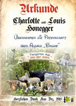 18 10 12 Charlotte und Lois Honegger Alpaka Bruno