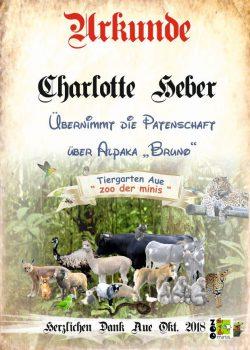 18 10 15 Charlotte Heber Alpaka Bruno